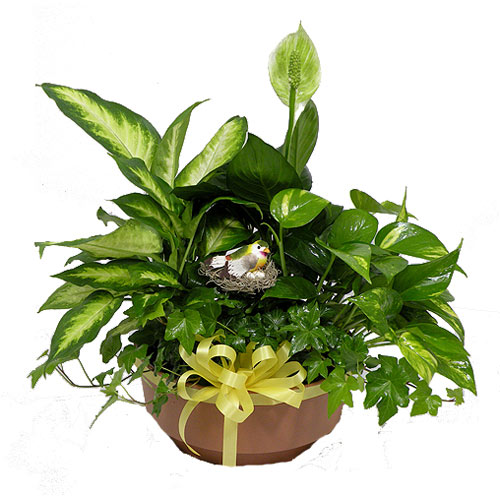 This manageable dish garden combines 4 green plants that can soothe the spirit as well as provide joy for any occasion.<br/><br/>